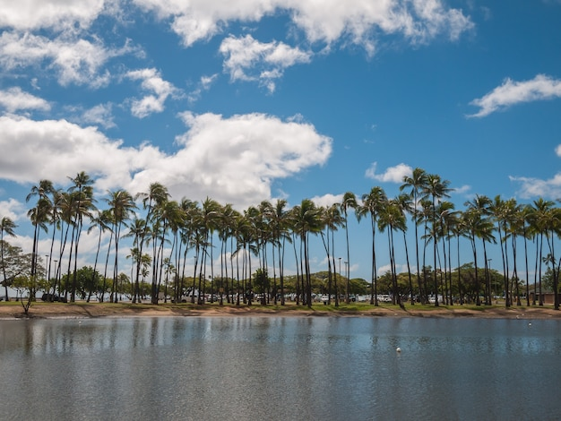 Drzewo kokosowe w parku plażowym ala moana na hawajach