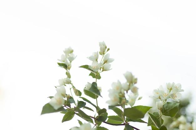 Drzewo kwiat nad naturą