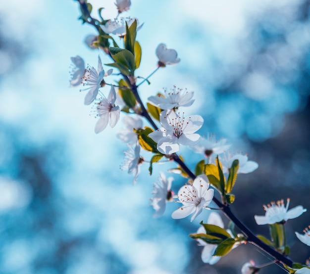 Drzewo kwiat wiosna z tulipanami.
