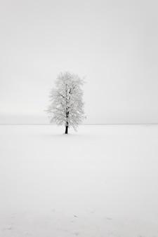 Drzewo liściaste na polu.