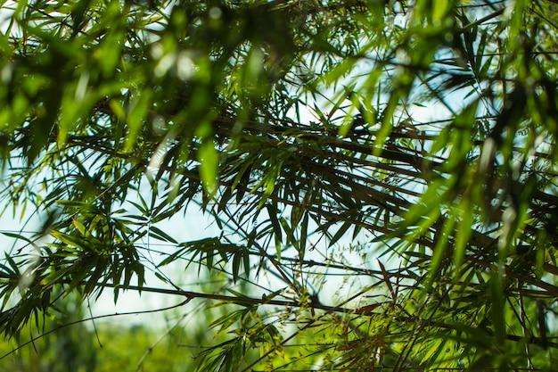 Drzewo liście dla natury i oszczędzają zieleń