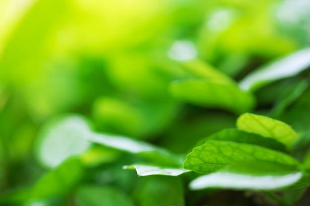 Drzewo liście dla natury tła i save zieleń