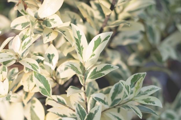 Drzewo liście dla natury tła i save zielonego pojęcie