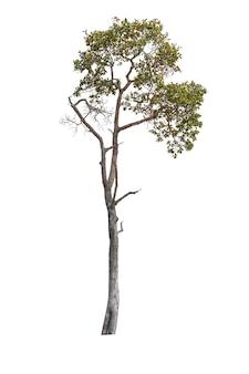 Drzewo na białym tle