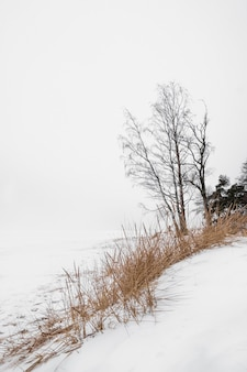 Drzewo na brzegu zaśnieżonego jeziora zimą w stylu minimalizmu nad brzegiem zatoki fińskiej w sankt petersburgu