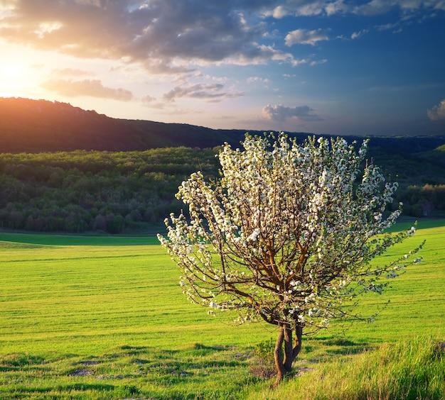 Drzewo na łące górskiej
