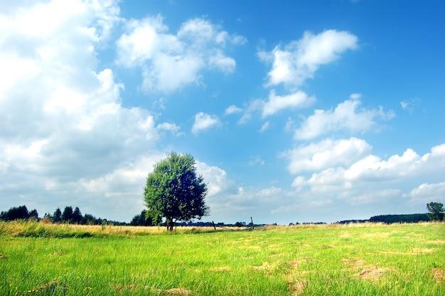 Drzewo na łące w słoneczny dzień
