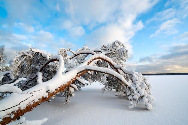 Drzewo na śniegu leży na brzegu zamarzniętego jeziora.