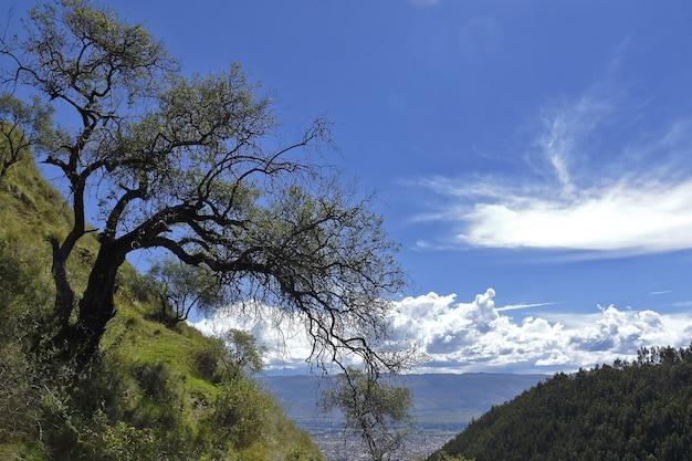 Drzewo na szczycie góry nad horyzontem