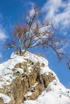 Drzewo na szczycie skały na błękitnym niebie. krajobraz. japonia. nagano. jigokudani monkey park.