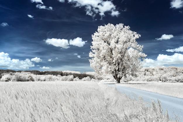 Drzewo na trawiastym polu w pobliżu pola pszenicy pod pięknym pochmurnym niebem