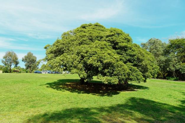 Drzewo na trawie.