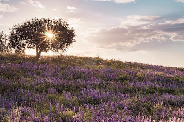 Drzewo na wzgórzu kwitnących łubinów