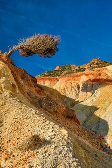 Drzewo na zboczu wzgórza milos wyspa grecja