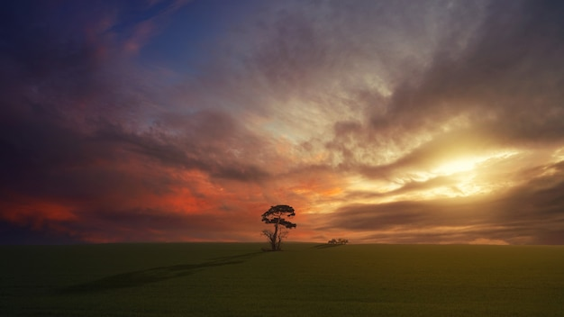 Drzewo na zielonym polu podczas złotej godziny