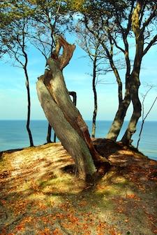 Drzewo nad morzem
