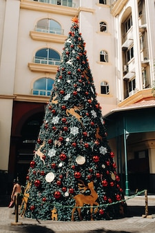 Drzewo noworoczne w tropikach. port louis, mauritius