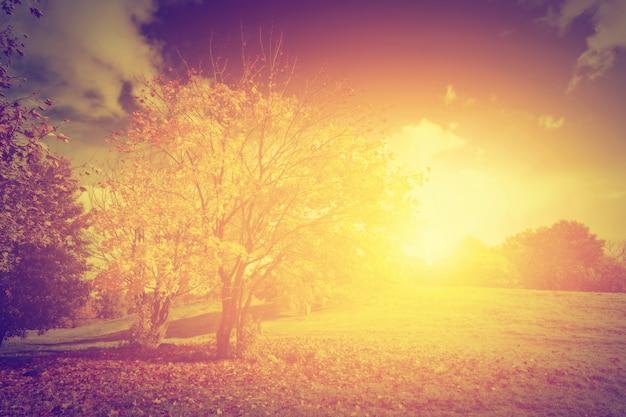 Drzewo o zachodzie słońca