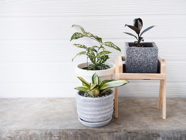 Drzewo oczyszczające powietrze houseplants w nowoczesnym pojemniku na betonowym stole z białą drewnianą powierzchnią ściany
