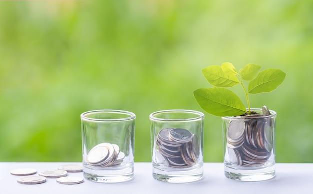 Drzewo pieniędzy z monetą na rozwój firmy