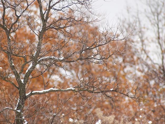 Drzewo pokryte białym śniegiem na rozmytym tle