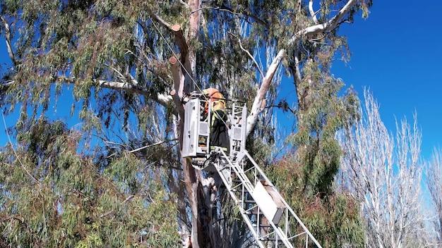 Drzewo ratownicze strażak na szczycie drabiny na zewnątrz.