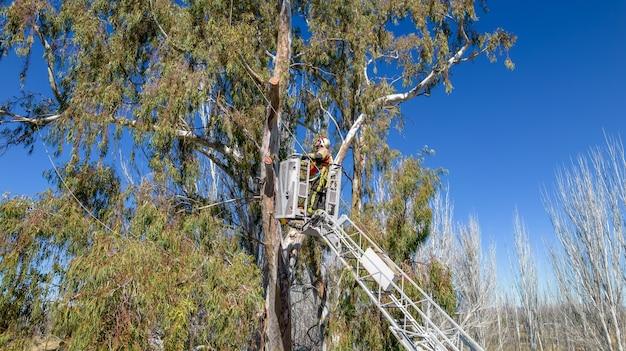 Drzewo ratownicze strażaka na szczycie drabiny.
