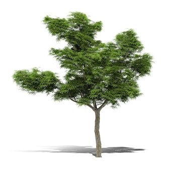 Drzewo renderowania 3d