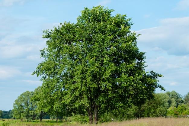 Drzewo rosnące na łące
