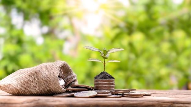 Drzewo rosnące na stosie monet i worek pieniędzy na zielonym tle koncepcji wzrostu gospodarczego