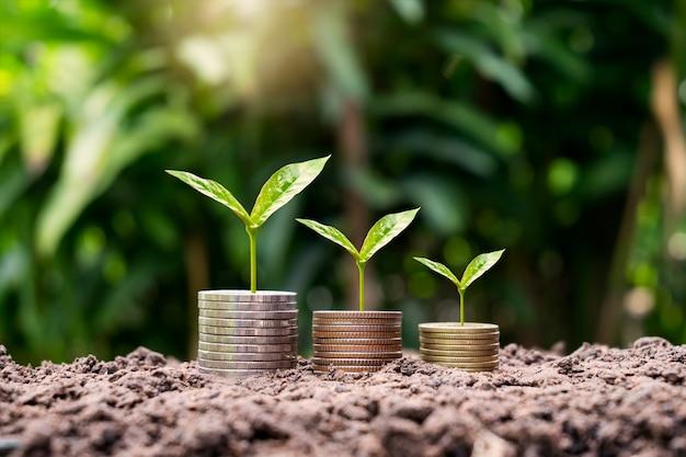 Drzewo rosnące na stosie monet na koncepcji rozwoju biznesu