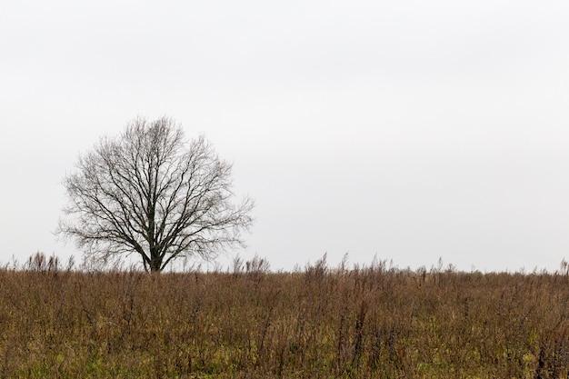 Drzewo rosnące na wzgórzu bez liści w jesienną pochmurną pogodę