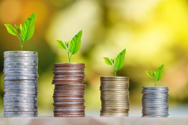 Drzewo rośnie na stosie monet z promień słońca do oszczędzania pieniędzy koncepcji