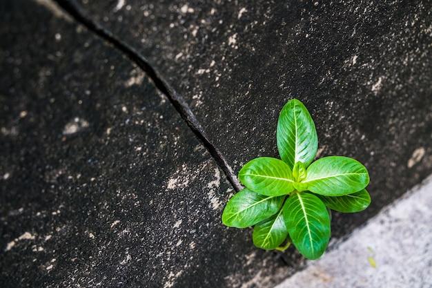Drzewo rośnie ze starego tła ściany