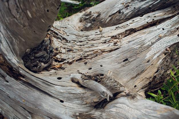 Drzewo rozlane. pierścienie w pobliżu drzewa.