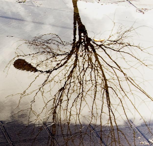Drzewo streetlight w kałuży