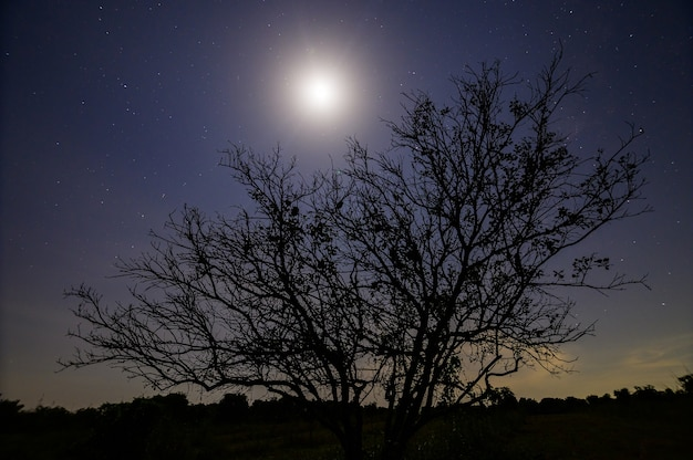 Drzewo sylwetka w nocy przy świetle księżyca