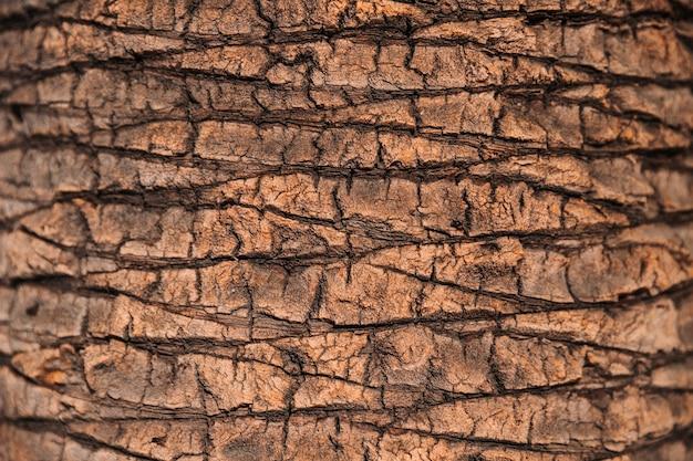 Drzewo tekstura tło
