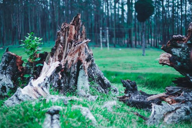 Drzewo upadłe i zniszczone przez niedawną burzę