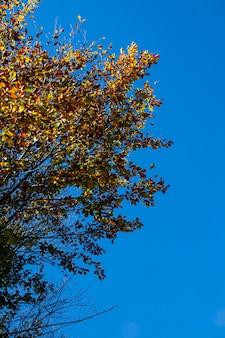 Drzewo w jesiennym detalu z żółtymi liśćmi pod błękitnym niebem