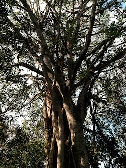Drzewo w kenii lesie