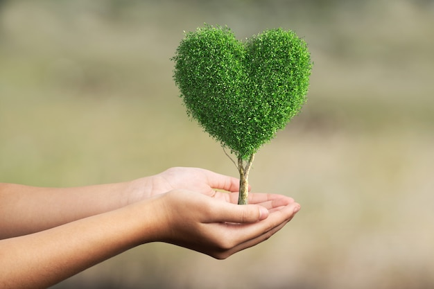 Drzewo w kształcie serca w ludzkiej dłoni