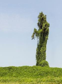 Drzewo w kształcie zombie, straszne drzewo halloween