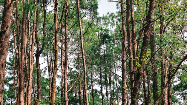Drzewo w lesie dla tła.