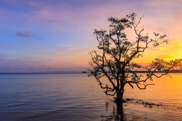 Drzewo w morzu na zmierzchu.
