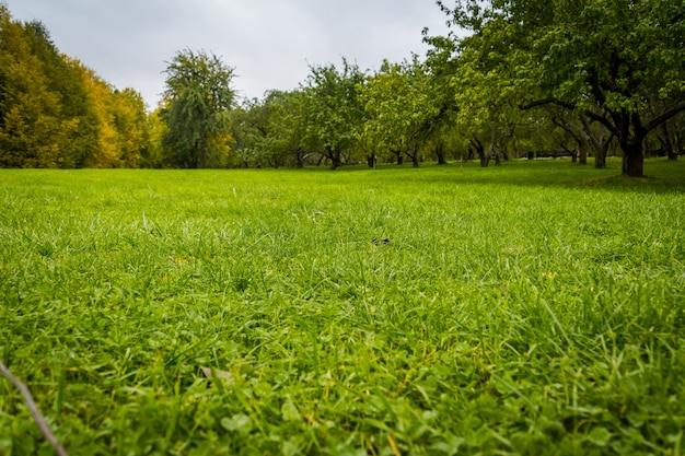 Drzewo w parku miejskim z kolorowymi liśćmi, sezon jesienny.