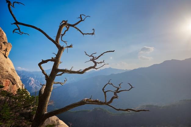 Drzewo w seoraksan park narodowy, korea południowa