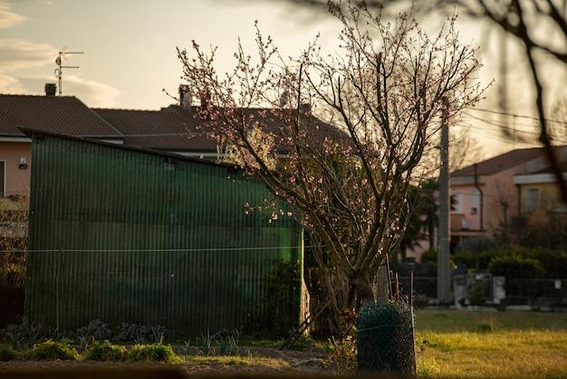 Drzewo w slumsach o zachodzie słońca