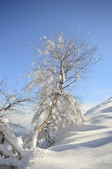 Drzewo w śniegu, zima w alpach