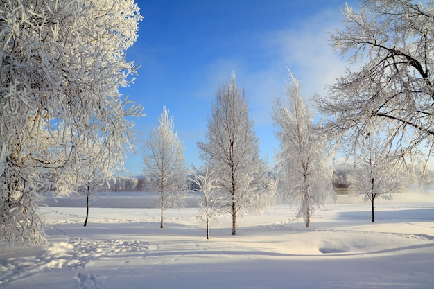 Drzewo w śniegu